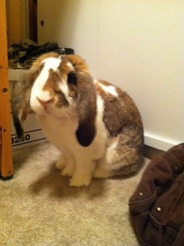 This is my bunny.