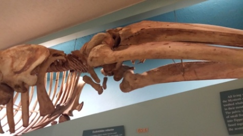 Sometimes the best exhibits are up above the crowds. #nmnh